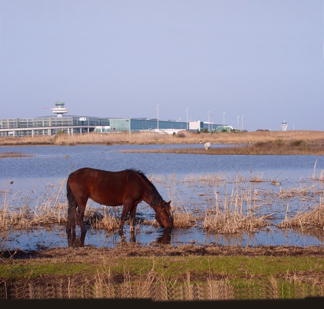 Horses at natural reserve
