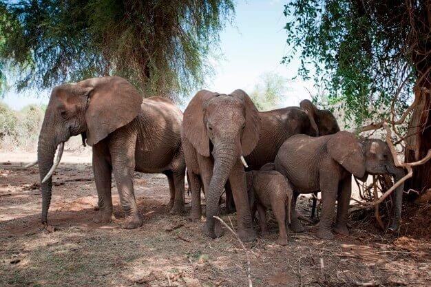 Elephants Sambura, Kenya