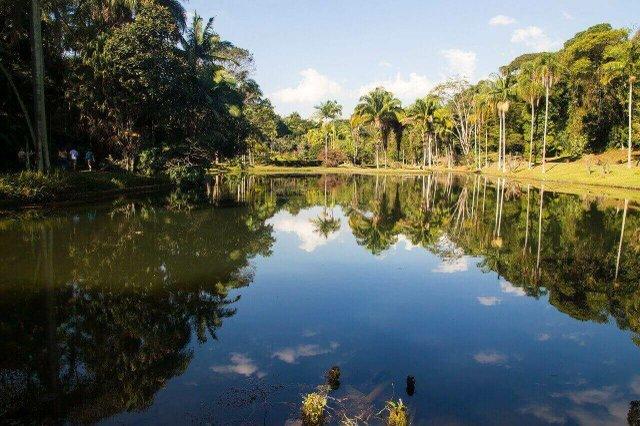 Amazon basin Brazil