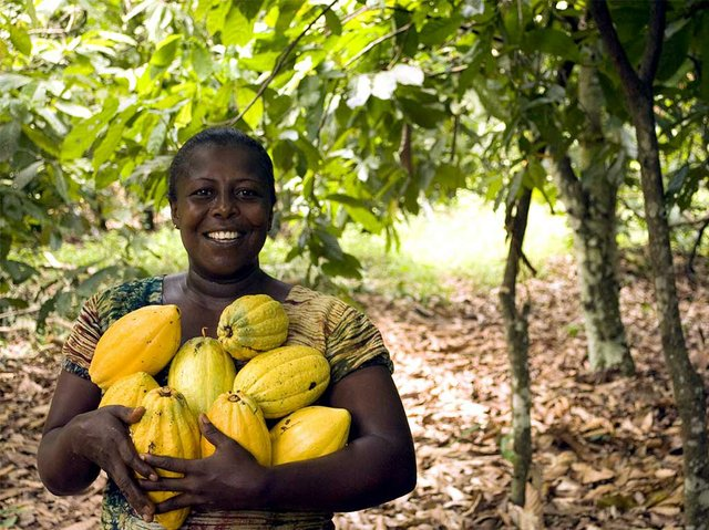 cocoa-fruit-harvest-Image-by-David-Greenwood-Haigh.jpg