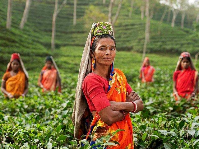 tea-fields-in-india.jpg