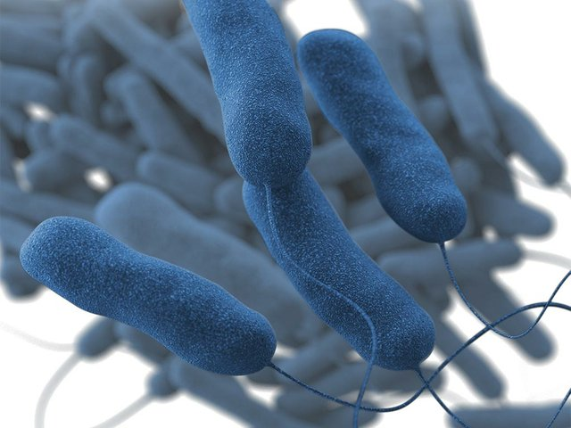 The-Legionella-pneumophila-bacterium-causes-the-majority-of-Legionnaires'-disease-outbreaks.-CDC.jpg