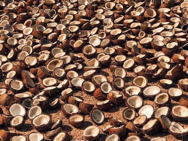 coconuts-in-sri-lanka.jpg