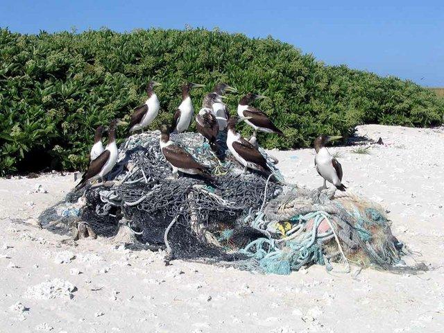 Marine-debris-collection,-photo-courtesy-of-USFWS-Pacific-Region-(CC-BY-NC-2.0)-01.jpg