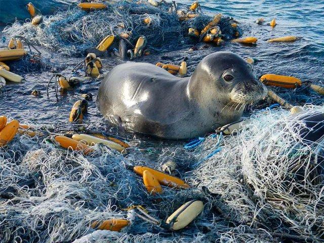 Seal-sits-on-marine-debris-on-the-beach,-photo-courtesy-of-USFWS-Pacific-Region-(CC-BY-NC-2.0).jpg