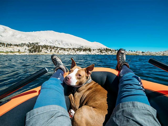 man-boating-with-dog.jpg