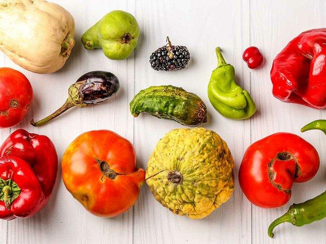 ugly-organic-vegetables-cucumber-peppers-eggplant-blackberry-dogwood-pumpkin-zuc.jpg
