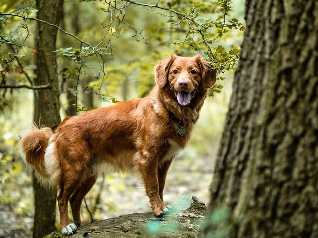 dog-in-the-woods.jpg