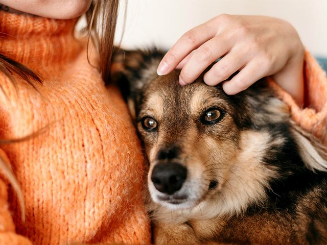woman-petting-dog-on-her-lap.jpg