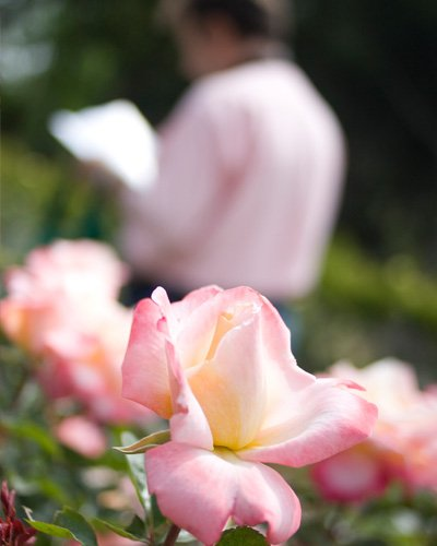 Visitor at Barcelona's international rose competition