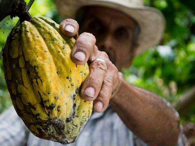 cocoa-farmer.jpg