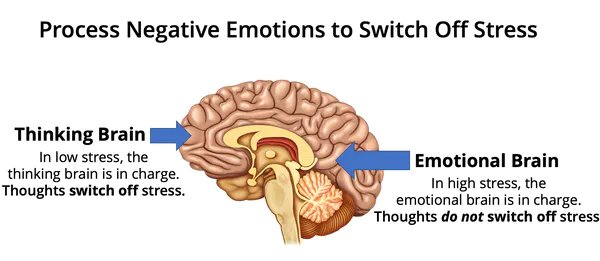 brain processing emotions.png