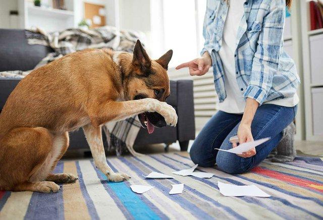 woman-punishing-dog.jpg