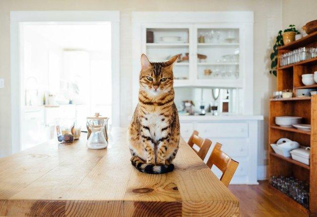 tabby-cat-on-table.jpg
