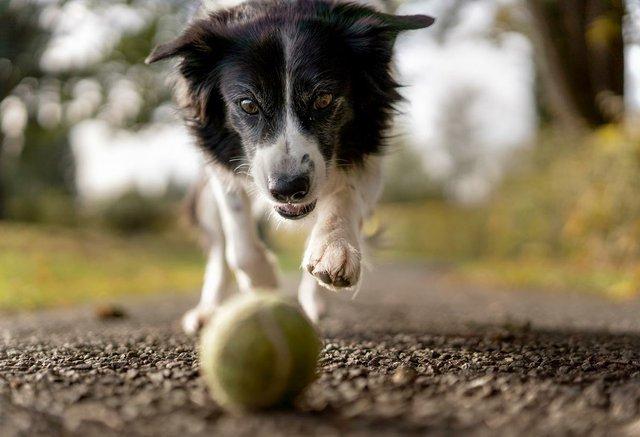 dog-chasing-ball.jpg