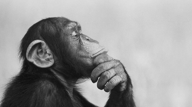 Monkeywebsite.jpg