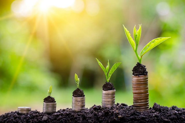 money-growth-investment-tree-growing-business.jpg