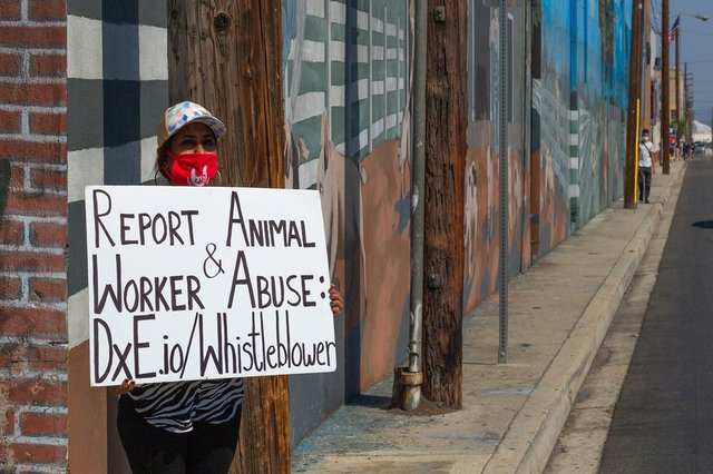 animal-rights-protestor.jpg