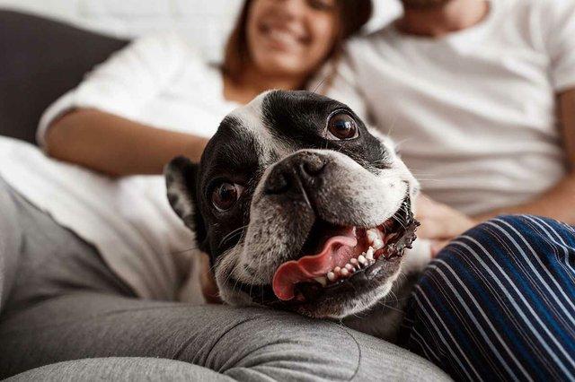 couple-resting-sofa-with-dog.jpg