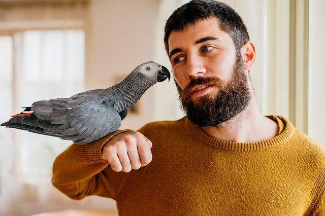 man-petting-cute-bird.jpg