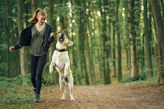 woman-with-her-beautiful-dog-in-park.jpg
