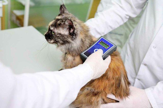 veterinarian-scanning-cat-micro-chip.jpg