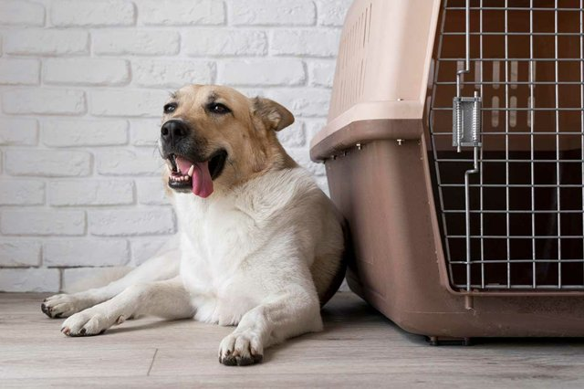 cute-smiley-dog-near-kennel-travel-carrier.jpg