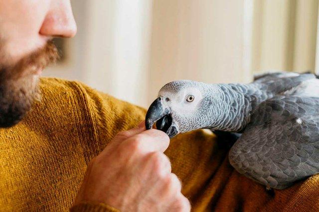 bearded-man-petting-bird.jpg