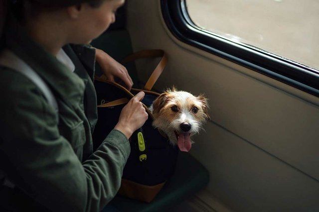 dog-in-carrier-on-the-train.jpg