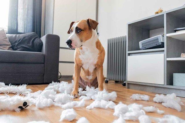 guilty-dog-destroyed-teddy-bear.jpg