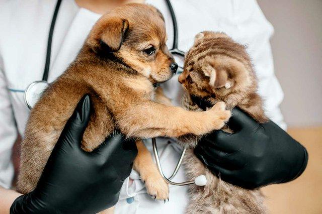 veterinarian-black-gloves-with-dog-cat-in-hands.jpg