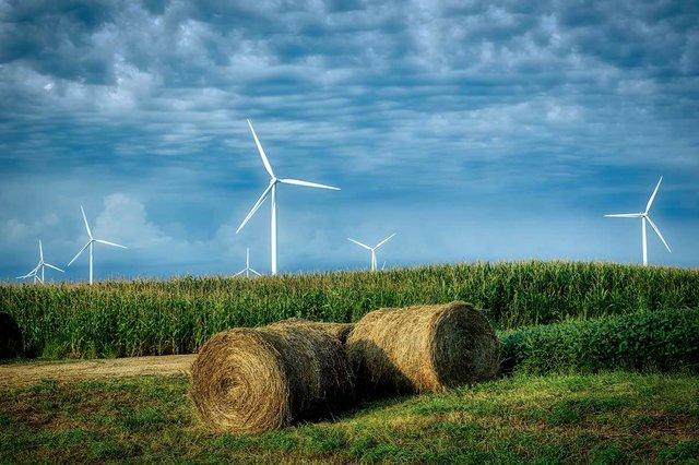 wind-turbines-in-field.jpg