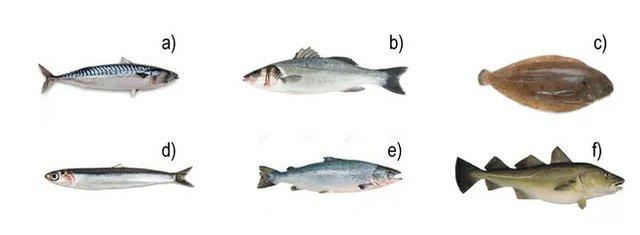 fish-quiz.jpg