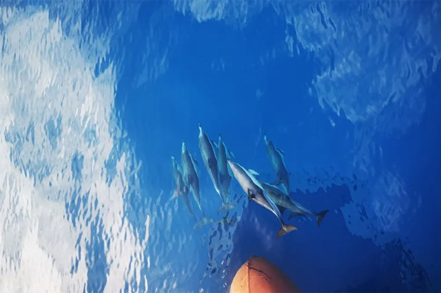 dolphins-in-front-of-ship.jpg