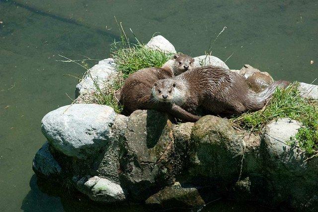 otters-in-Vall-de-Boí,-©-Tara-Shain-2021-02.jpg