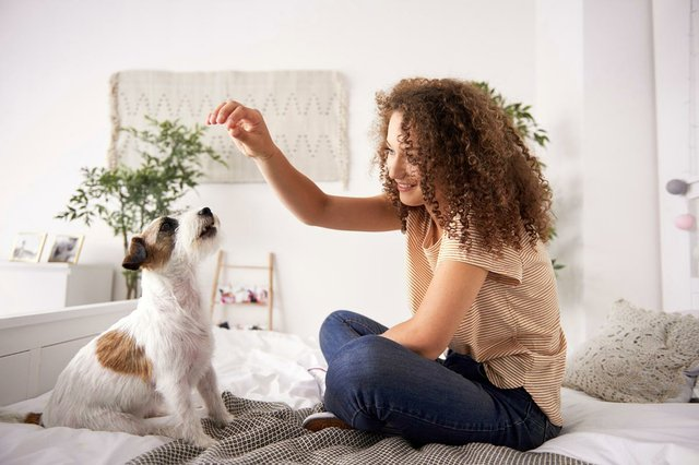 woman-playing-with-dog-bed.jpg
