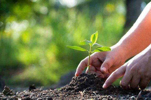 hands-planting-tree-in-ground.jpg