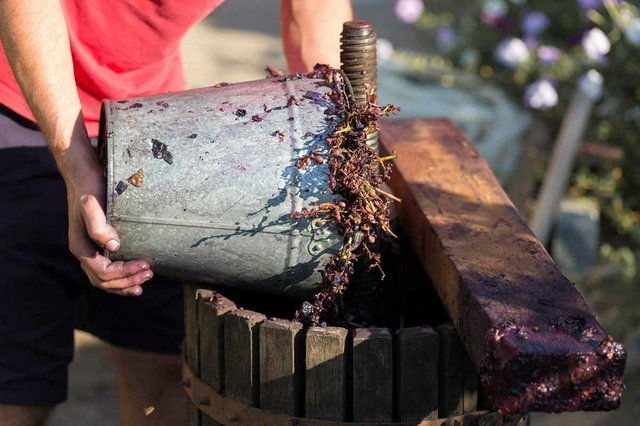 winemaker-pours-raw-materials-into-press-production-traditional-wines.jpg