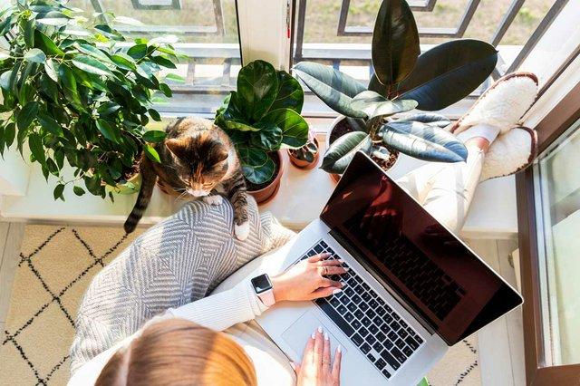 woman-in-armchair-putting-feet-windowsill-work-laptop-home-cat-nearby-wants-attention.jpg