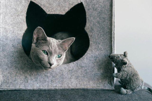 grey-cat-in-his-grey-bed.jpg