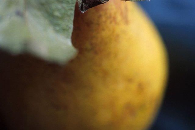 Pear home