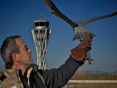 man and bird 2 home