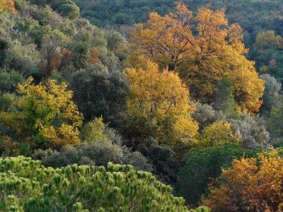 mixed-trees-in-collserola-home.jpg