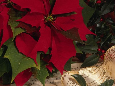 Poinsettia and carol music home