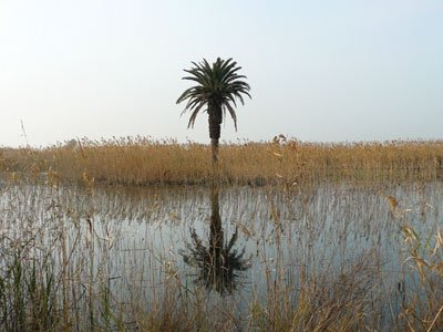 Marshlands in the Delta del Llobregat