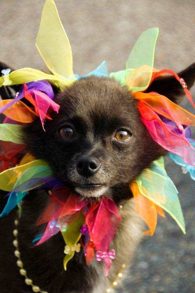 Carnival dog